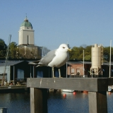 A seagull and the Alexander Nevski's church in Suomenlinna