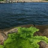 Algae at sea shore