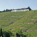 Viinipeltoa mäellä