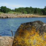 Jäkälää kivessä