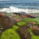 Algae on the shore rocks