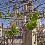 Puun lehtiä, taustalla Aleksanteri Nevskin kirkko