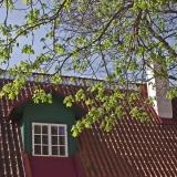 Katto ja puu