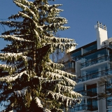 A snowy fir and the apartment building at Kesäkatu 8