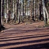 Uutela nature trail