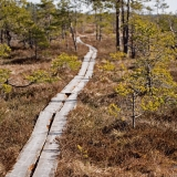 Walking boards at Valkmusa swamp