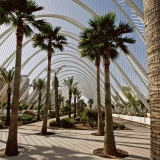 Palm trees at the garden of the art and science center