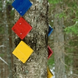 Route markers in a birch