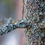 A mossy tree