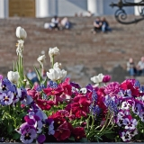 Planted flowers at Alexander II:n statue