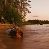 Driftwood at Venäjänhiekka
