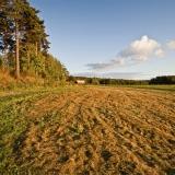 A field at Viikinojanpuisto park