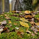 Moss tuft