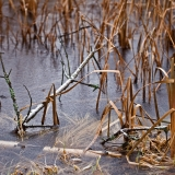 Uutelan jäätynyt laguuni