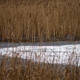 Uutelan laguuni talviasussa