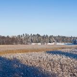 Winter panorama III