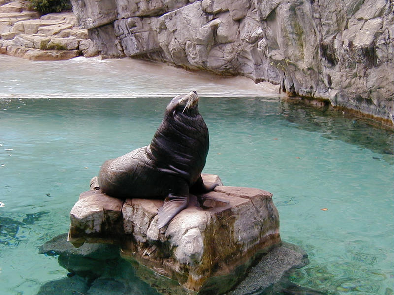 A seal at the Smithsonian National Zoological Park