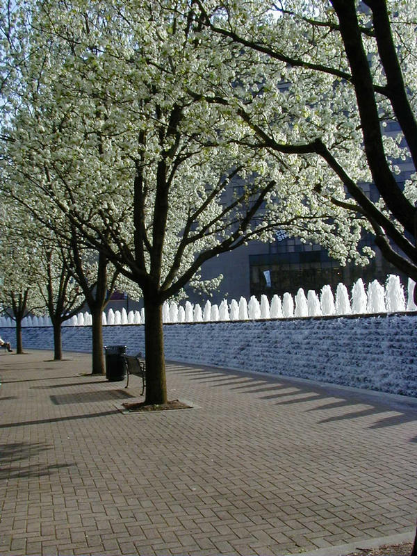 Fountains and decorative trees in downtown Lexington