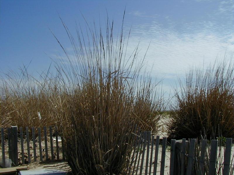 Kaisloja rannalla