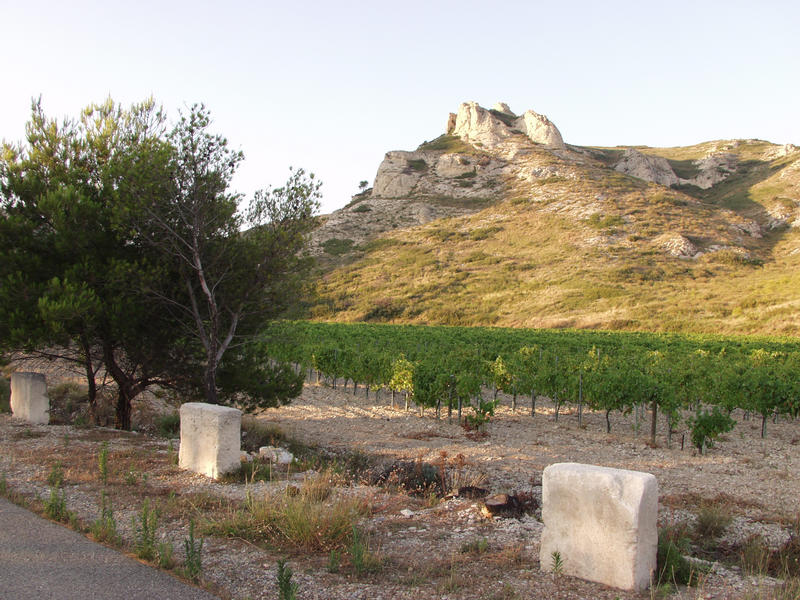 A vineyard and the Alpilles