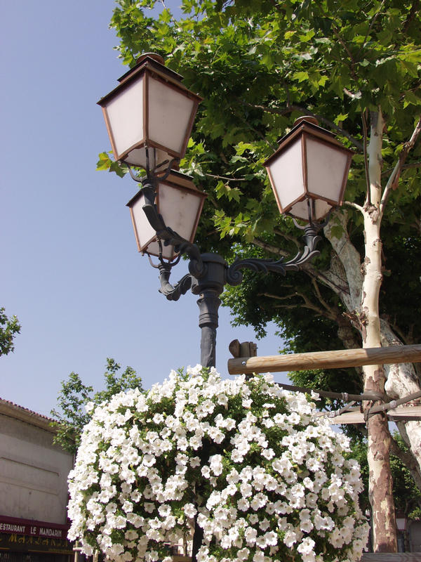 Flowers and a lamp post