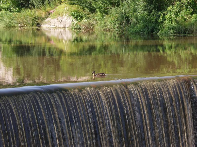 A duck swimming at the edge of the Vanhankaupunginkoski rapids