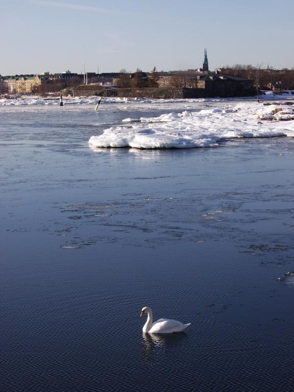 A swan in front of Southern Helsinki