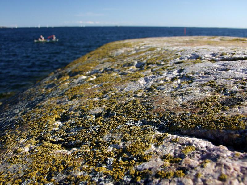 Lichen on a cliff