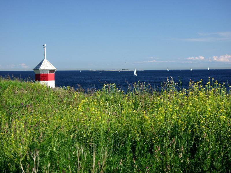 Loisto, rantakasveja ja purjeveneitä Suomenlahdella