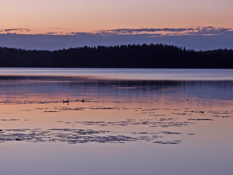 Ducks at lake Rusutjärvi
