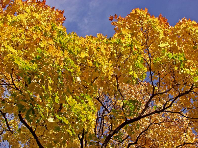 Autumn's glory of colors