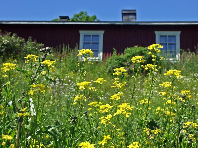 Kukkia talon pihalla