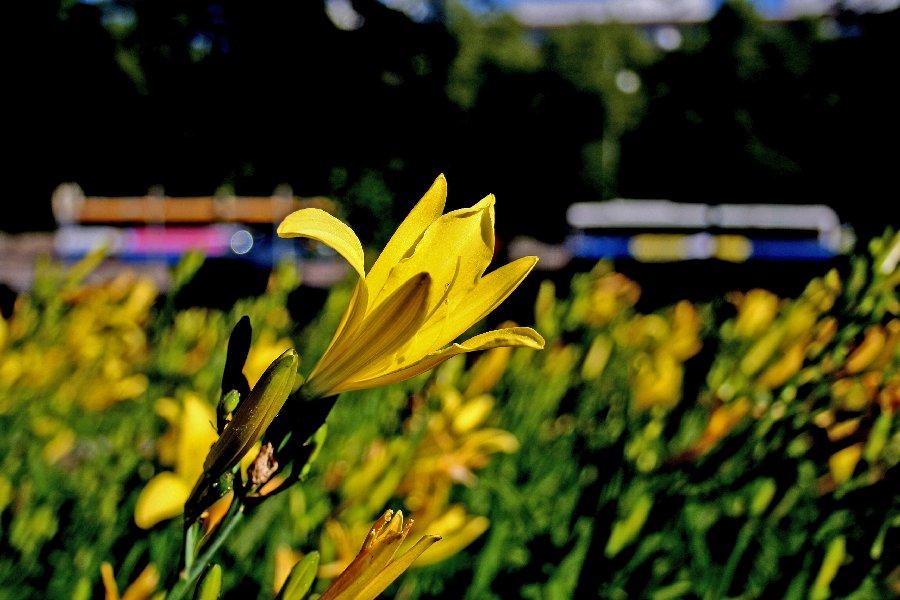 Kukka ja Hämeentien iltapäiväruuhka