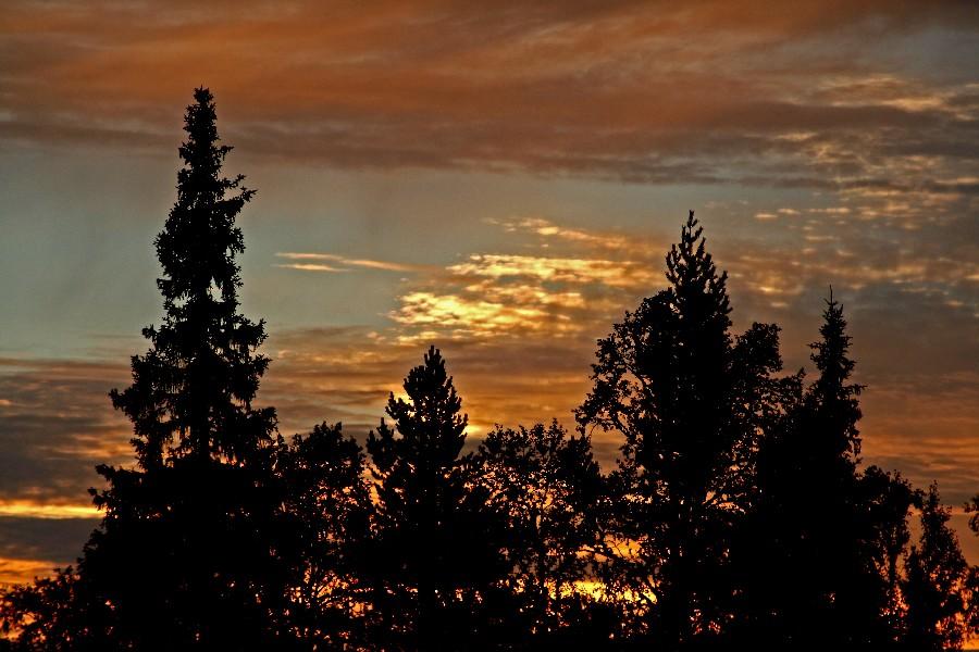 Auringonlasku kuusien takana