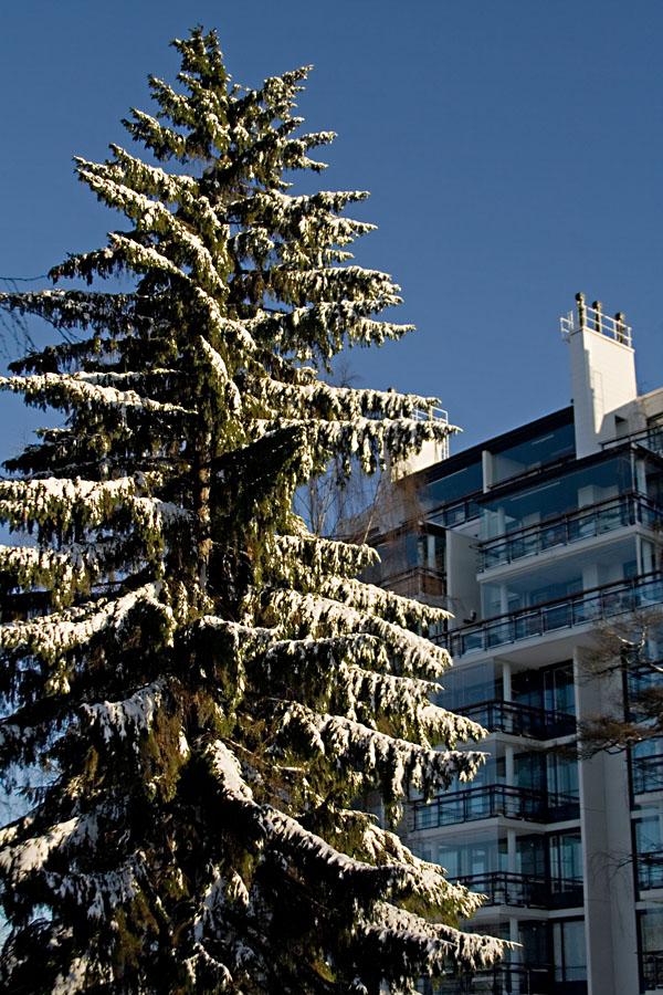 A snowy fir and the apartment building at Kesäkatu 8