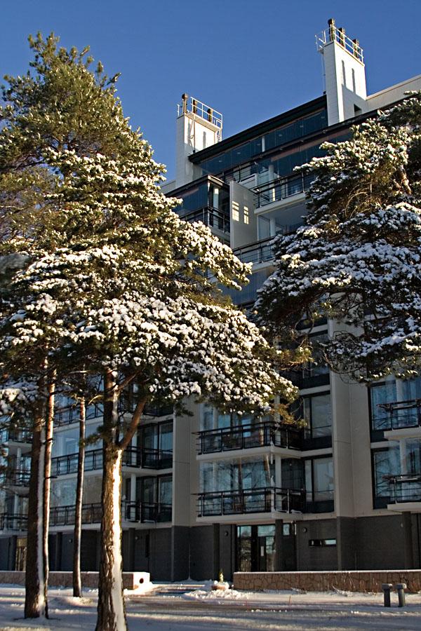 Pines at Merikannontie