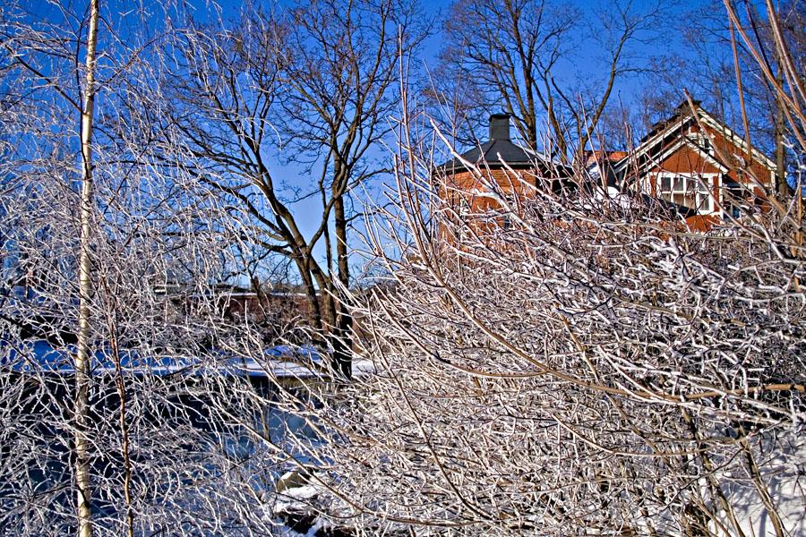 Talvisia puita Kuninkaankartanonsaarella