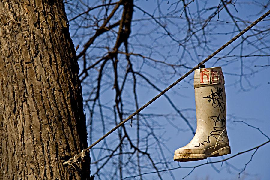 Kumisaapas roikkuu puun tukikaapelista