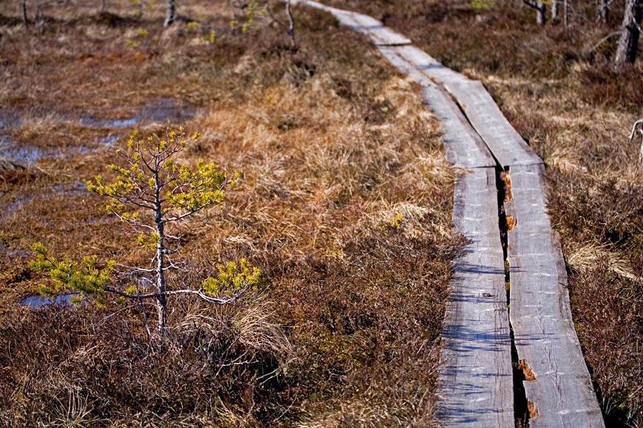 Pitkospuut Valkmusan suolla