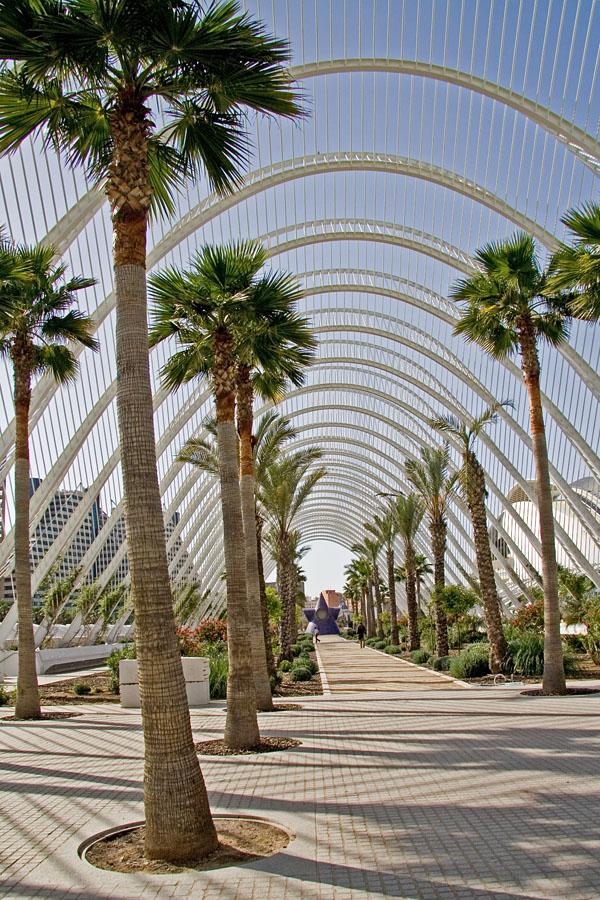 Palmuja taide- ja tiedekeskuksen puutarhassa