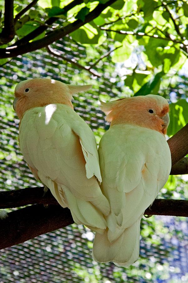 Lintuja Central parkin eläintarhassa