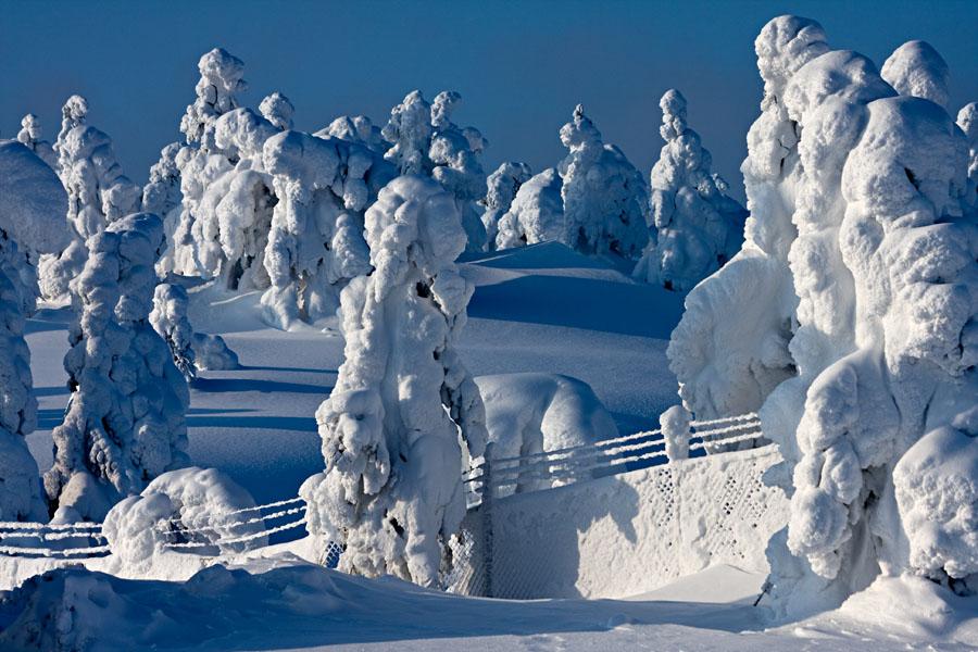Luminen aita