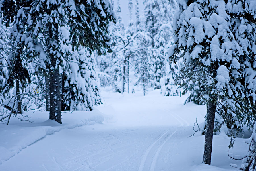 A ski track at Valtavaara