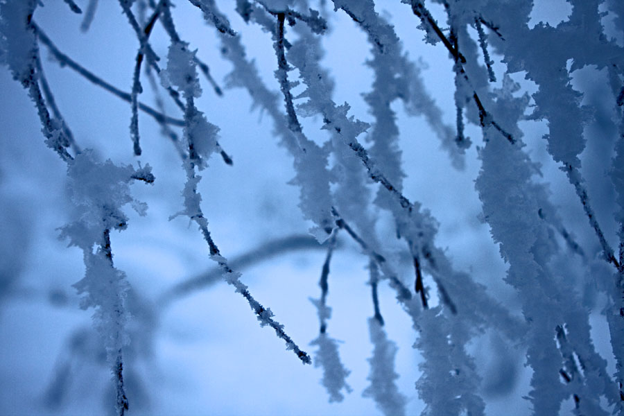 Lumisia oksia