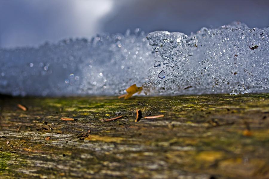 Lähikuva jäähileisestä puunrungosta
