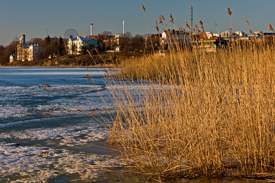 Rushes at the southern end of Töölönlahti bay, Linnunlaulu district villas in the background