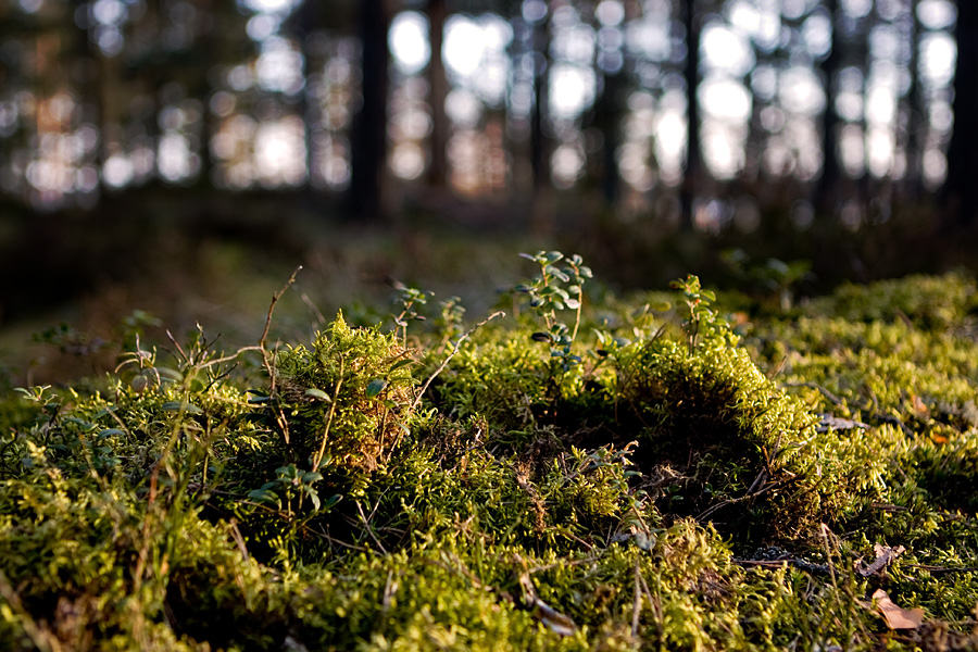 Mossy soil at Kallahdenniemi