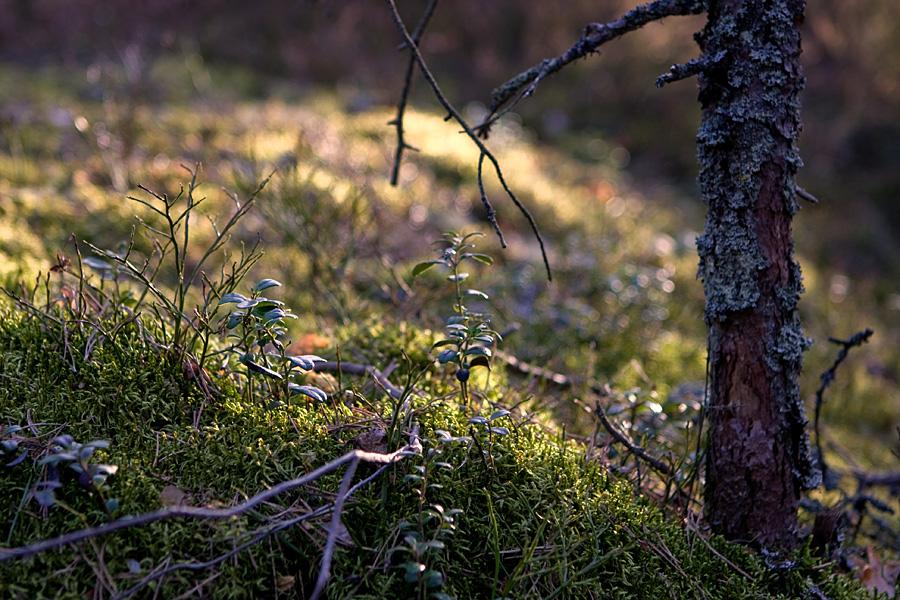 Mossy soil at Kallahdenniemi