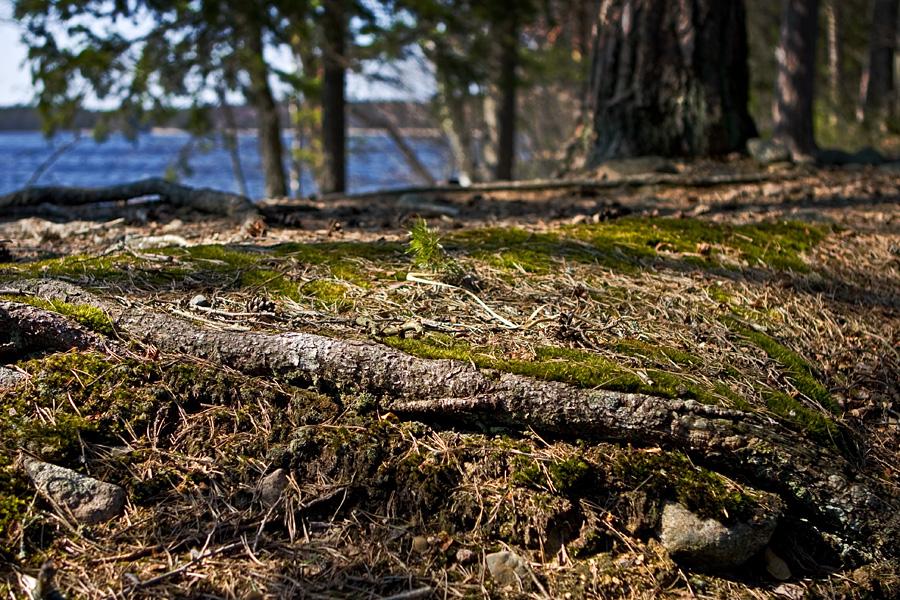 Kyynäränharjun maaperää Liesjärven kansallispuistossa