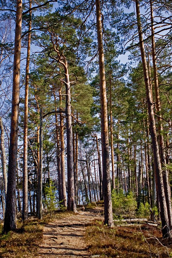 Esker scenery at Kyynäränharju